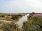 nature reserve Ria Formosa